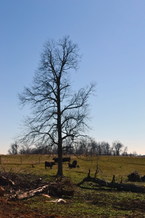 tree in main pasture in winter